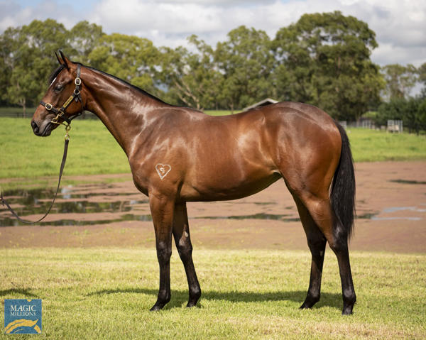 Torryburn Stud - MM Gold Coast Yearling Sale Lot 28