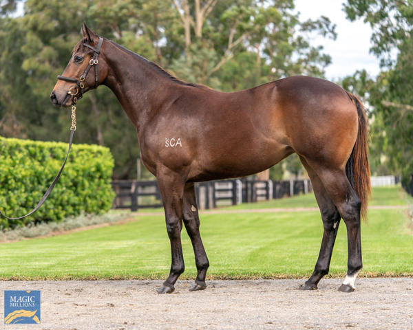Coolmore Stud - MM Gold Coast Yearling Sale Lot 283