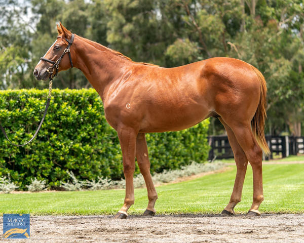 Coolmore Stud - MM Gold Coast Yearling Sale Lot 288