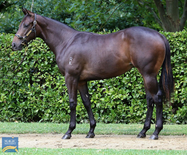 Newhaven Park - MM Gold Coast Yearling Sale Lot 33