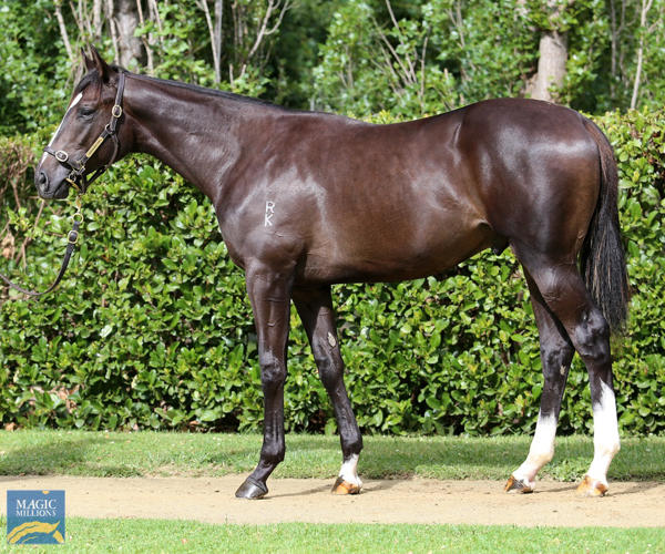 Newhaven Park - MM Gold Coast Yearling Sale Lot 331