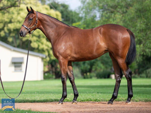 Vinery Stud - MM Gold Coast Yearling Sale Lot 340