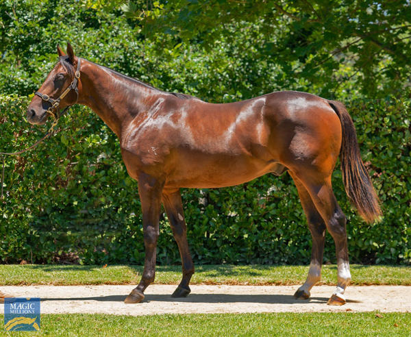 Newhaven Park - MM Gold Coast Yearling Sale Lot 343