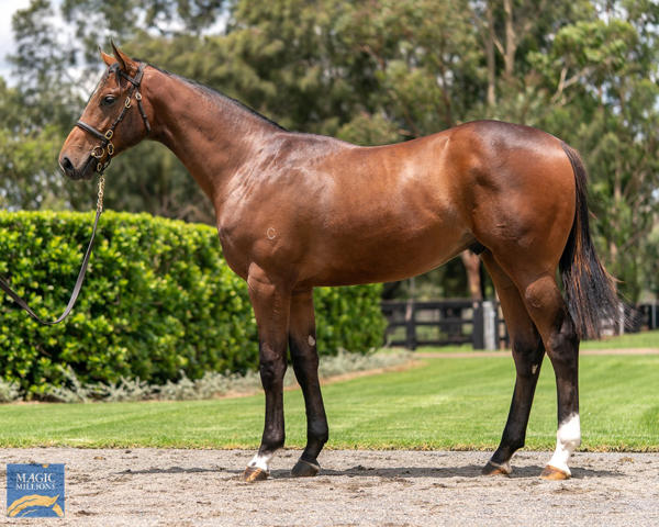 Coolmore Stud - MM Gold Coast Yearling Sale Lot 346