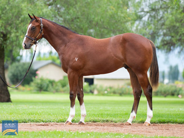Vinery Stud - MM Gold Coast Yearling Sale Lot 35