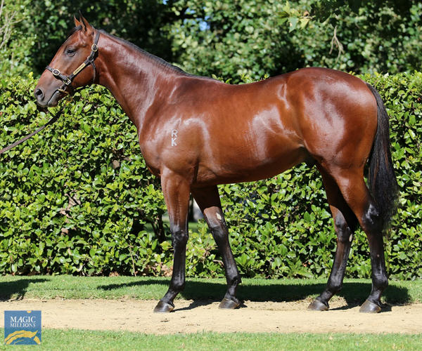Newhaven Park - MM Gold Coast Yearling Sale Lot 374