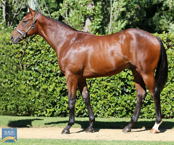 Newhaven Park - MM Gold Coast Yearling Sale Lot 376