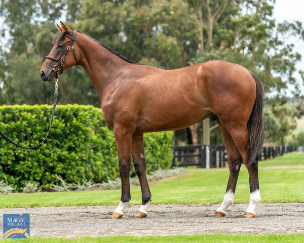 Coolmore Stud - MM Gold Coast Yearling Sale Lot 381