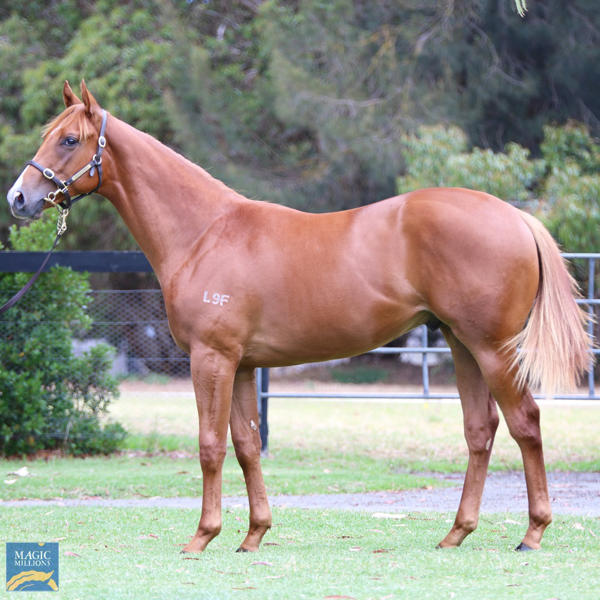 Mill Park Stud - MM Gold Coast Yearling Sale Lot 40