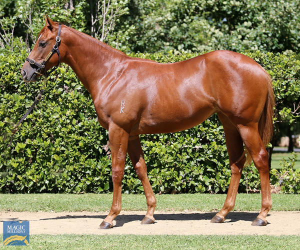 Newhaven Park - MM Gold Coast Yearling Sale Lot 400