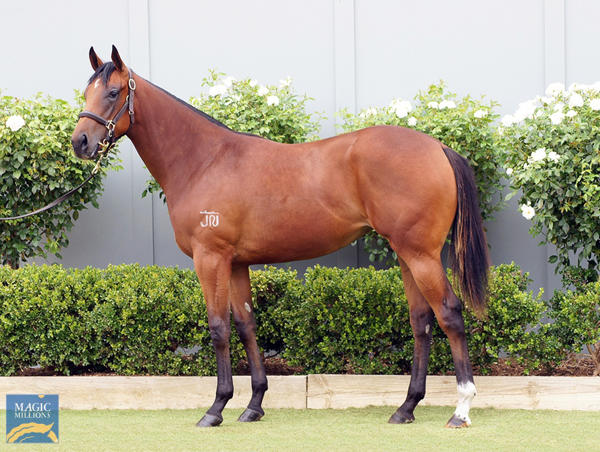 Bowness Stud - MM Gold Coast Yearling Sale Lot 431