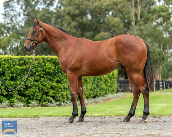 Coolmore Stud - MM Gold Coast Yearling Sale Lot 434