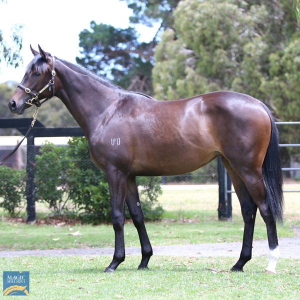 Mill Park Stud - MM Gold Coast Yearling Sale Lot 441