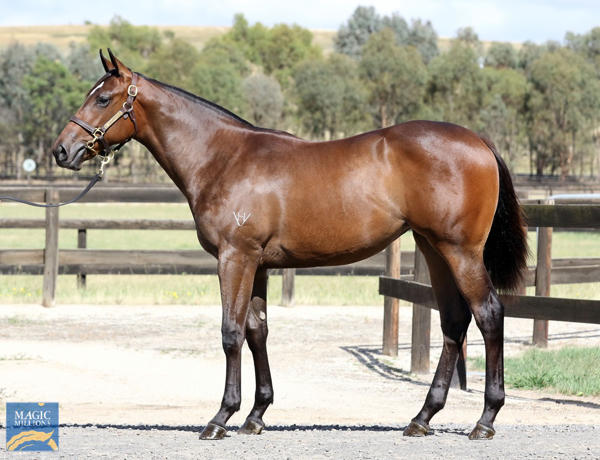 Daisy Hill Breeding And Investments - MM Gold Coast Yearling Sale Lot 47
