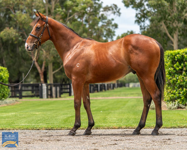 Coolmore Stud - MM Gold Coast Yearling Sale Lot 479