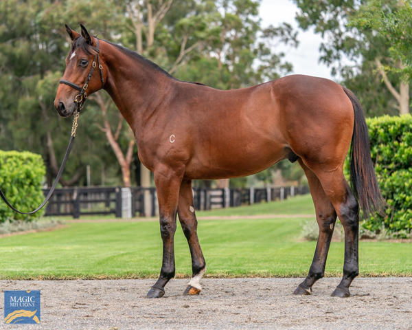 Coolmore Stud - MM Gold Coast Yearling Sale Lot 48