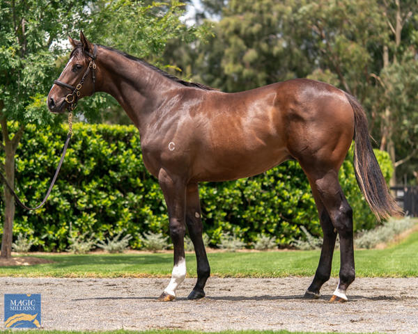 Coolmore Stud - MM Gold Coast Yearling Sale Lot 514