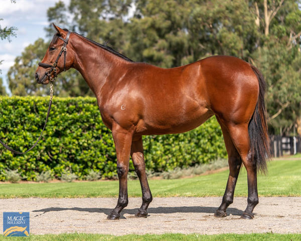 Coolmore Stud - MM Gold Coast Yearling Sale Lot 518