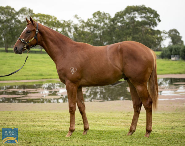 Torryburn Stud - MM Gold Coast Yearling Sale Lot 548