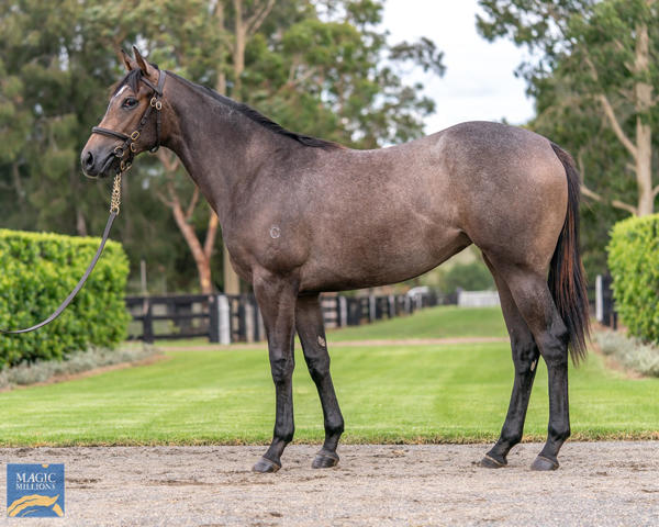 Coolmore Stud - MM Gold Coast Yearling Sale Lot 55