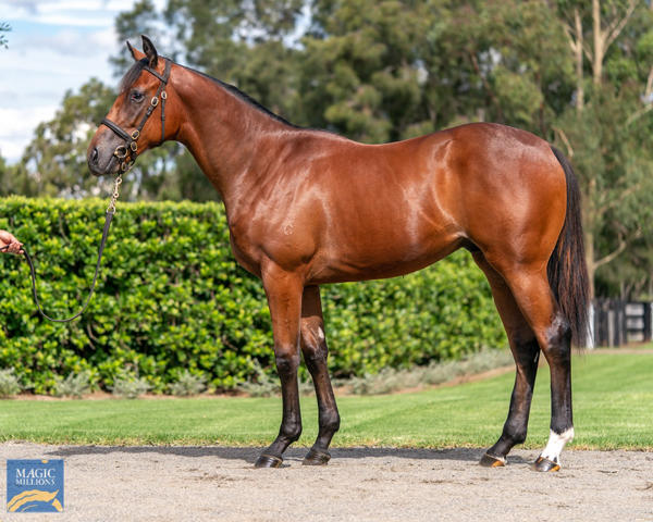 Coolmore Stud - MM Gold Coast Yearling Sale Lot 558