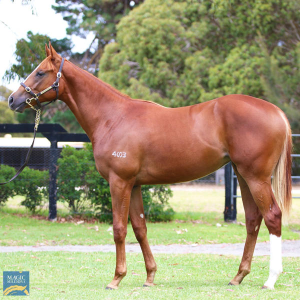 Mill Park Stud - MM Gold Coast Yearling Sale Lot 567