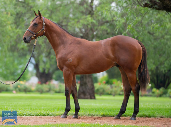Vinery Stud - MM Gold Coast Yearling Sale Lot 577