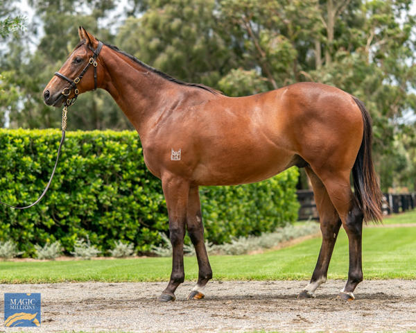 Coolmore Stud - MM Gold Coast Yearling Sale Lot 579