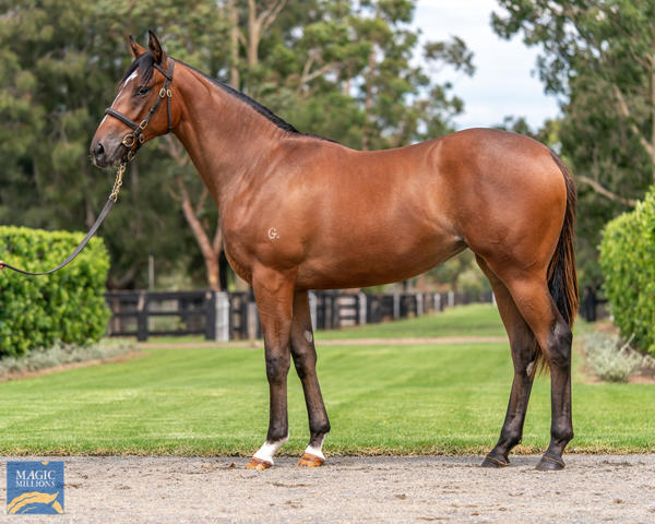 Coolmore Stud - MM Gold Coast Yearling Sale Lot 582