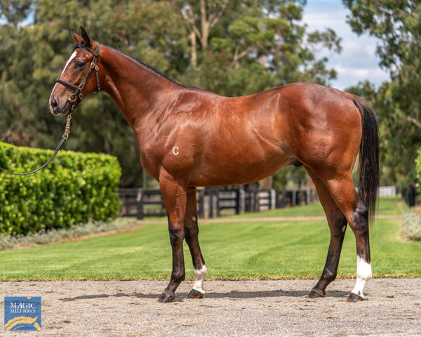 Coolmore Stud - MM Gold Coast Yearling Sale Lot 587