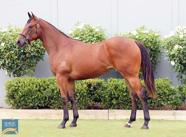 Bowness Stud - MM Gold Coast Yearling Sale Lot 592