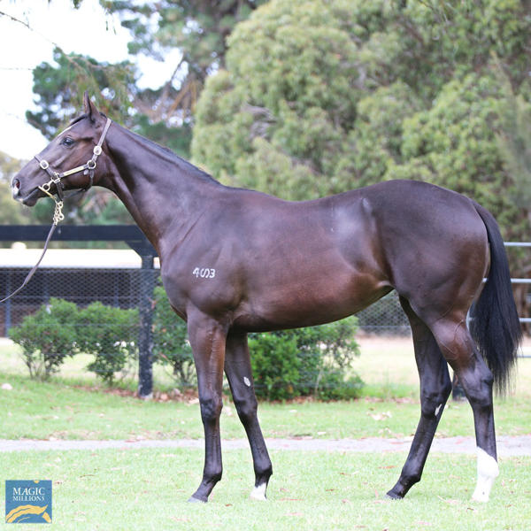 Mill Park Stud - MM Gold Coast Yearling Sale Lot 626
