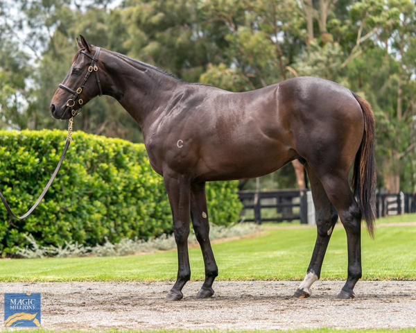 Coolmore Stud - MM Gold Coast Yearling Sale Lot 636