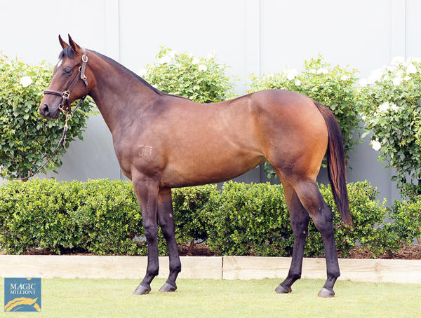Bowness Stud - MM Gold Coast Yearling Sale Lot 644