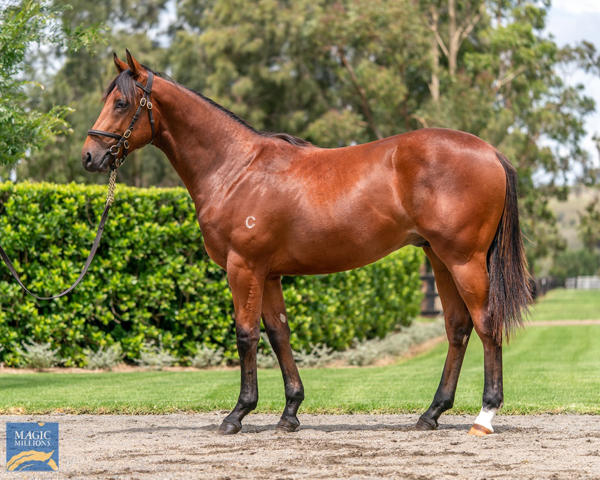 Coolmore Stud - MM Gold Coast Yearling Sale Lot 650