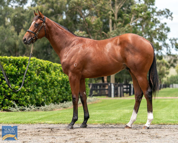 Coolmore Stud - MM Gold Coast Yearling Sale Lot 652