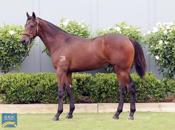 Bowness Stud - MM Gold Coast Yearling Sale Lot 679