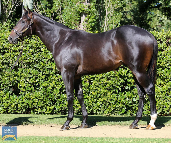 Newhaven Park - MM Gold Coast Yearling Sale Lot 698