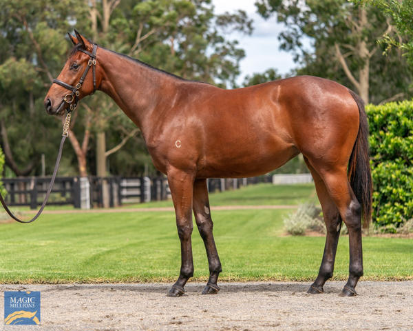 Coolmore Stud - MM Gold Coast Yearling Sale Lot 714