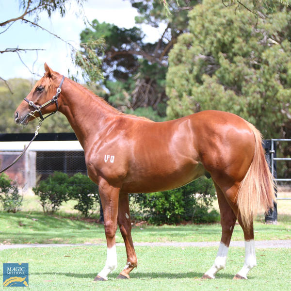 Mill Park Stud - MM Gold Coast Yearling Sale Lot 752