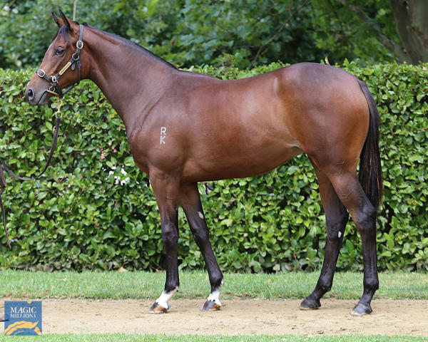 Newhaven Park - MM Gold Coast Yearling Sale Lot 798