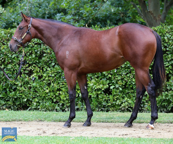 Newhaven Park - MM Gold Coast Yearling Sale Lot 8