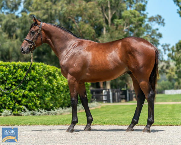 Coolmore Stud - MM Gold Coast Yearling Sale Lot 80