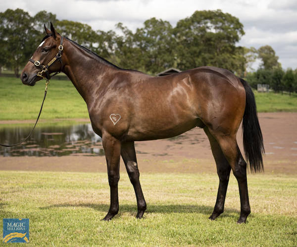 Torryburn Stud - MM Gold Coast Yearling Sale Lot 804
