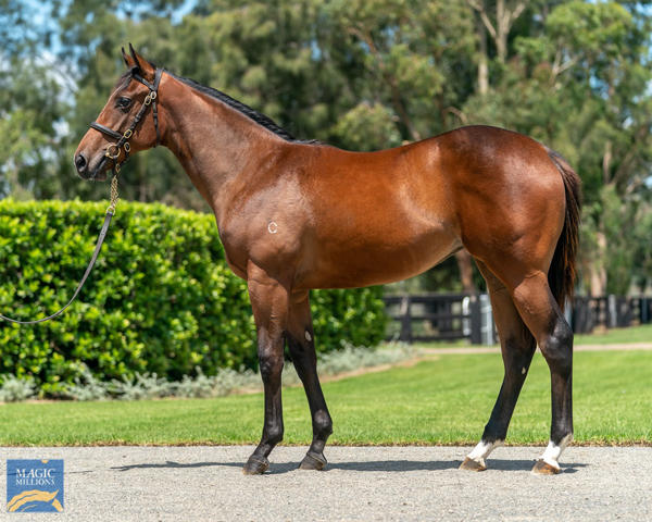 Coolmore Stud - MM Gold Coast Yearling Sale Lot 805