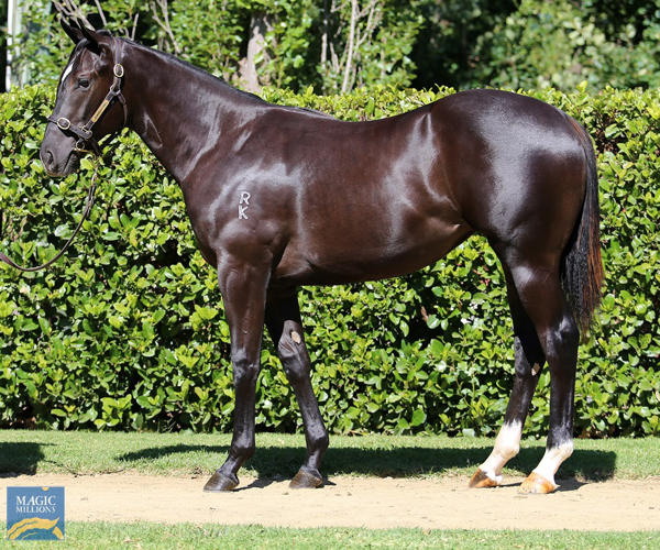 Newhaven Park - MM Gold Coast Yearling Sale Lot 818