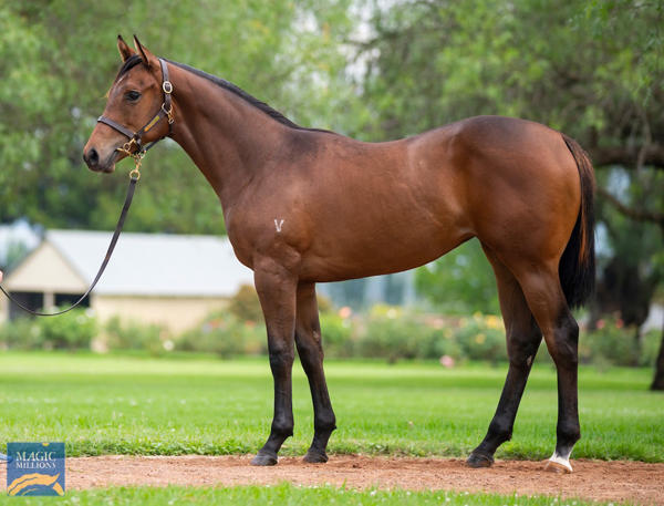 Vinery Stud - MM Gold Coast Yearling Sale Lot 824