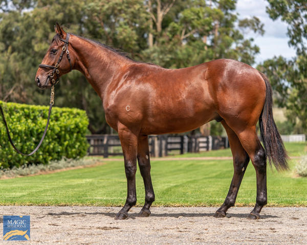 Coolmore Stud - MM Gold Coast Yearling Sale Lot 829