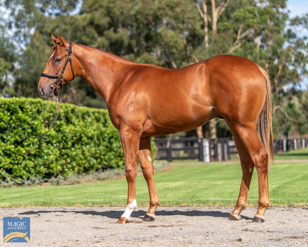 Coolmore Stud - MM Gold Coast Yearling Sale Lot 851