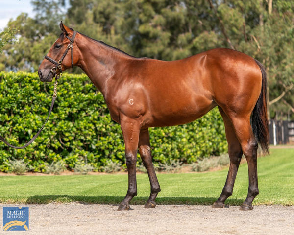 Coolmore Stud - MM Gold Coast Yearling Sale Lot 860